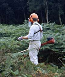 brushcutting bracken